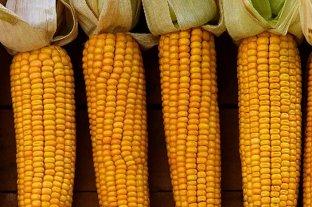 Los granos cerraron con fuertes subas en Rosario