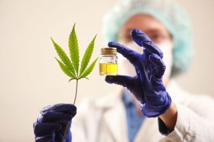 Usuarios de cannabis medicinal destacan que ayuda a paliar dolores y regularizar el cuerpo