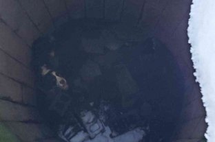 Rescataron a un perro que cayó a un pozo y permaneció perdido 43 días a bajas temperaturas