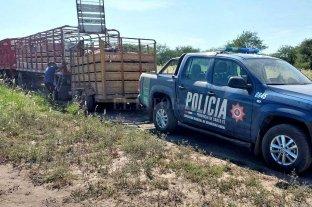 Recuperan en Santiago del Estero ganado robado en Ceres