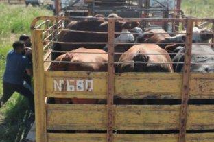 Caso Iannozzi: nuevos allanamientos y más ganado encontrado