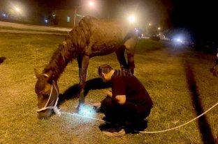 Rescatan a una yegua con signos de maltrato
