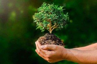 Con la mirada puesta en la importancia de los bosques se celebra el Día Mundial de la Naturaleza