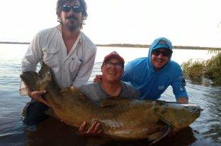 La increíble pesca de un Manguruyú de un metro y medio de largo en el río Paraná - El espécimen medía 146 centímetros.