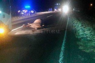 Murió un motociclista al chocar con una yegua en la Ruta 11 -