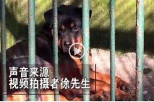 Acusan a un zoológico de China de hacer pasar a un perro por lobo