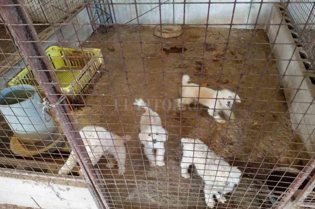 Los animales (canes y felinos) se encontraban en un criadero clandestino y en malas condiciones. Crédito: El Litoral