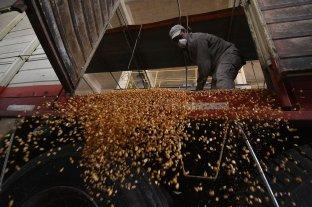 Los precios de los granos operaron estables y a la baja en Rosario