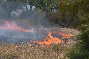 Cómo es la recuperación de la flora y fauna frente a los incendios en islas