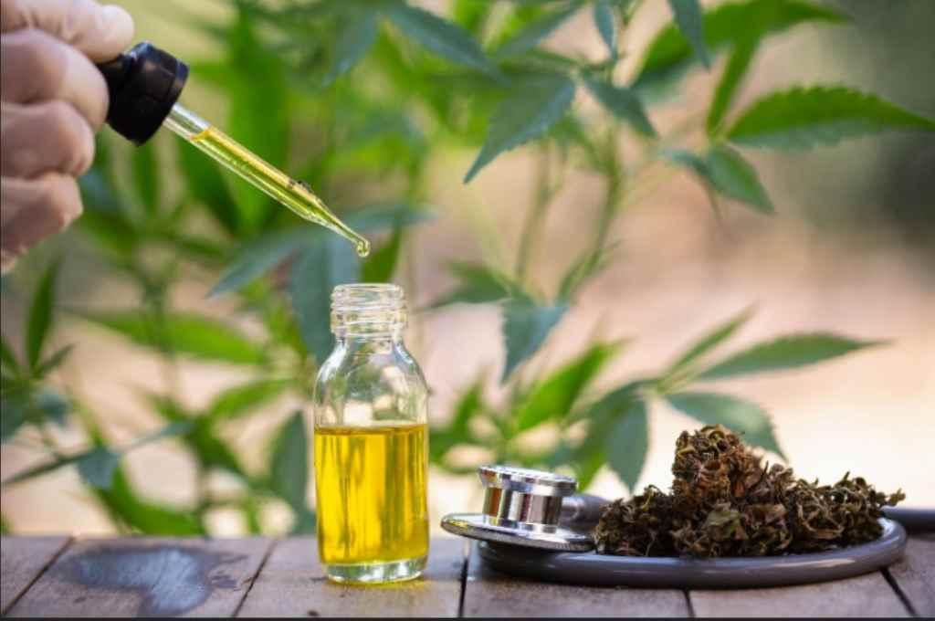 El proyecto propone garantizar la destrucción total de los componentes psicoactivos del cannabis (que no se utilizan para el aceite medicinal, por ejemplo), para cumplir con los requisitos legales vigentes.    Crédito: Internet