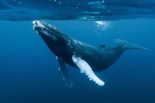 Advierten que el calentamiento de los océanos alcanzó niveles récord