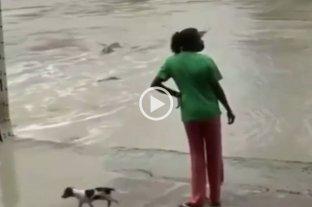 """Video: un cocodrilo le quiso comer el perrito y lo ahuyentó a """"ojotazos"""""""