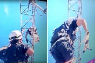 Heroico rescate de una gata a más de 40 metros de altura
