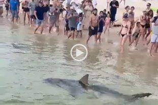 Video: un tiburón aterró a cientos de turistas que luego colaboraron para salvarle la vida