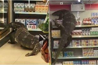 Enorme lagarto entra a tienda en Tailandia