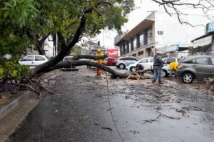 Un árbol cayó en Paraná y bloqueó calle Alsina