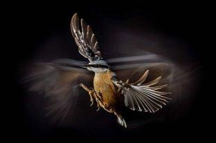 Se conocieron las imágenes finalistas del premio Bird Photographer 2021