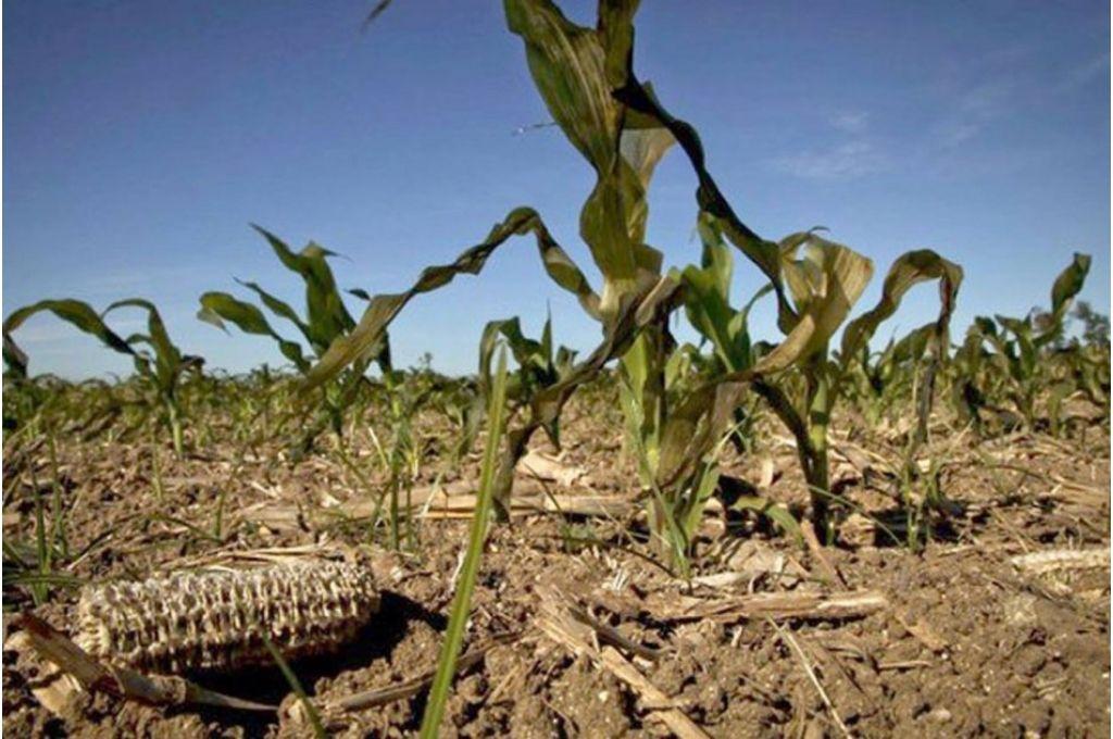 Asociaciones rurales de Entre Ríos reclamaron por la emergencia agropecuaria -  -