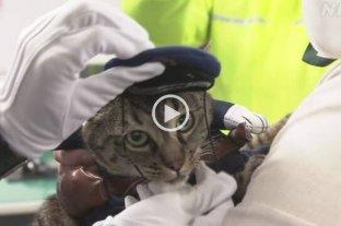 Video: una gata salva la vida de un anciano y se convierte en Jefa de Policía