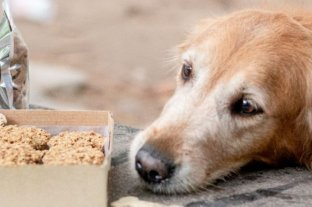 La alimentación sana y natural llegó a las mascotas