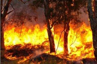 Corrientes registra el único incendio forestal del país