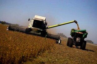 Soja: avanza la cosecha con rindes variables