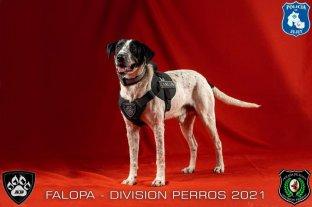 """La policía de Jujuy presentó a """"Falopa"""" y otros canes de su División Perros"""