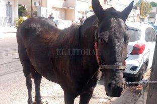 """El secuestro de la yegua """"Yiya"""" a un carrero expuso un grave problema social"""