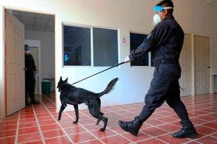 El Salvador utilizará perros para detectar el coronavirus en personas