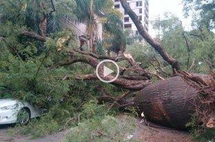 El viento tumbó varios árboles de la ciudad de Santa Fe -
