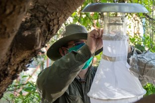 Investigan zonas propicias para los mosquitos en Córdoba