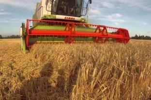 Alzas en los precios de los granos en el mercado local, en una rueda con buen nivel de operaciones