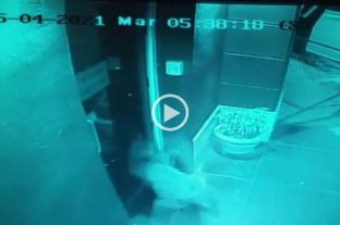 Video: un puma rompió una puerta de la municipalidad de Río Primero -  -