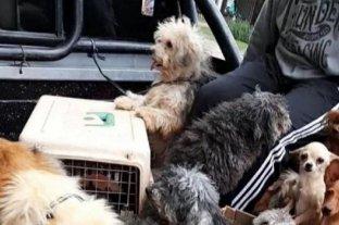 Allanaron un criadero clandestino con 40 perros en Corrientes en estado de abandono