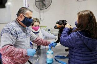La Municipalidad continúa con la campaña de castración de animales