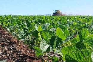 Ya se cosechó casi la mitad de la soja sembrada en Entre Ríos