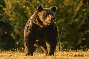 Acusan al príncipe Emanuel de Liechtenstein de matar al oso pardo más grande de Europa