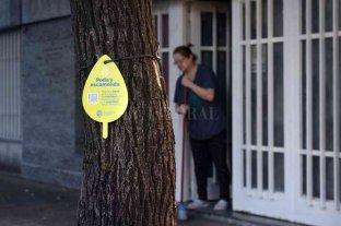 Arbolado: el plan de poda municipal alcanzará a 40.000 ejemplares en Rosario