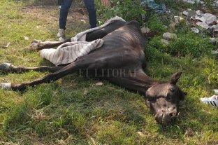 Rescataron a otro caballo maltratado