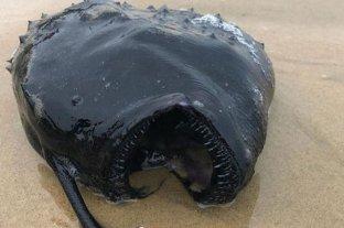 Expertos no se explican cómo un pez balón apareció en la playas de California