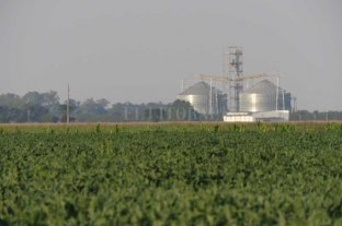 El precio de la soja superó los 600 dólares, el valor más alto desde 2012