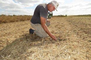 En la Argentina solo se repone 30% de los nutrientes que se extraen de los suelos cultivados