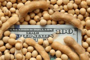 Cayó US$ 5 el precio de la soja disponible pero subió el trigo
