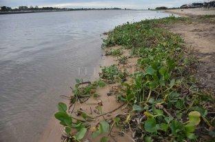 El Río Paraná sigue a la baja: quedó cerca del metro en Santa Fe