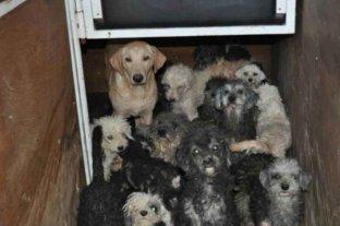 Criadero clandestino: revelaron que ningún perro ladra tras los años de maltrato