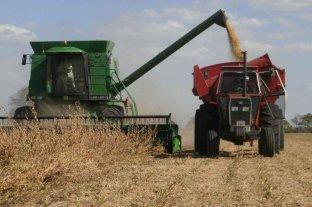 Soja: se cosecharon 33 millones de toneladas
