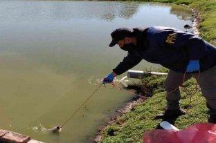 Entre Ríos: la UIF participó en allanamientos por posibles delitos de lavado y contra el ambiente