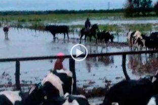 Video: cayeron 120 mm en Pedro Gómez Cello