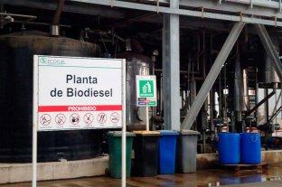 """""""Alarma"""" a las cadenas de valor el proyecto de ley de biocombustibles"""