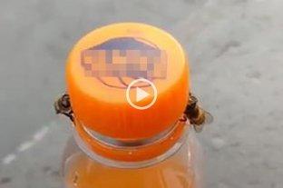 Video: un par de abejas destapan una gaseosa en Brasil y se vuelven virales